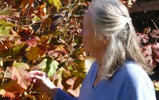 Glenda with oakleaf hydrangea 2017; C Robertson; CC2.0