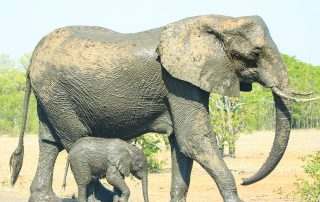 Mother and baby elephant, via Pixabay, CC 2.0
