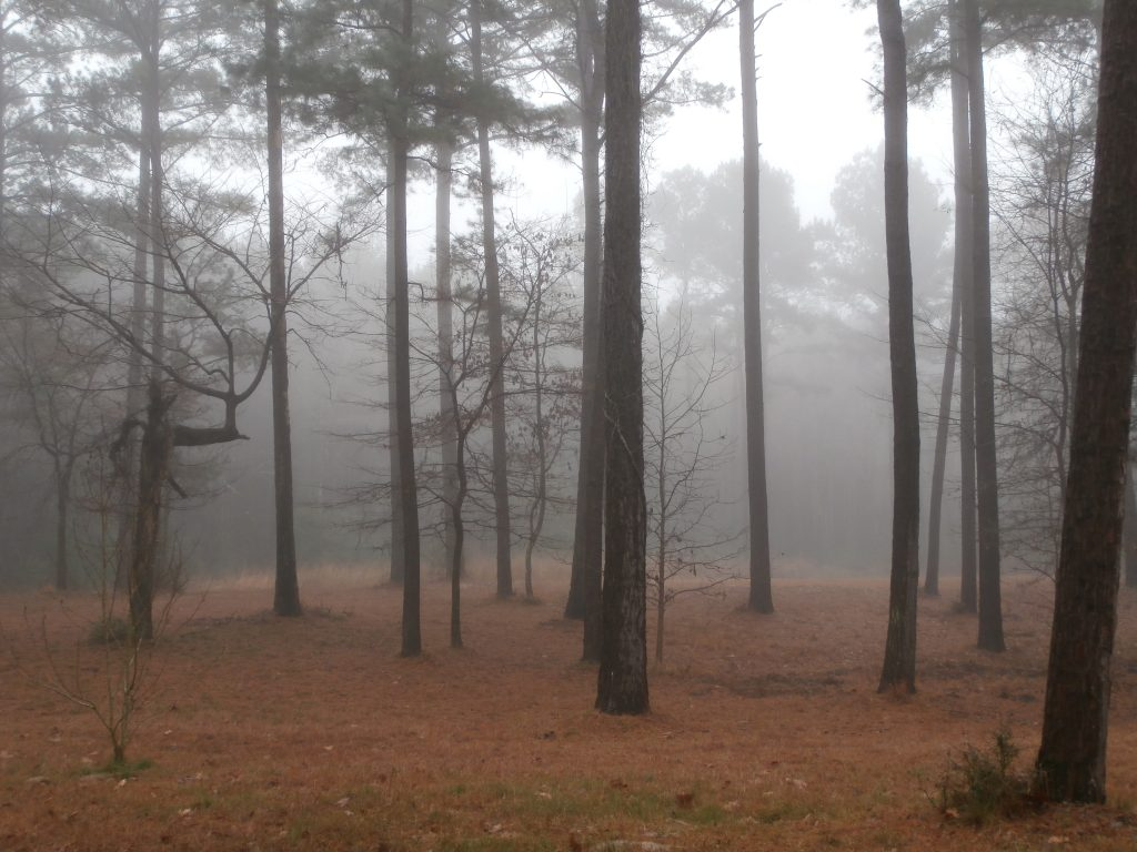 Foggy Day at Earthsprings